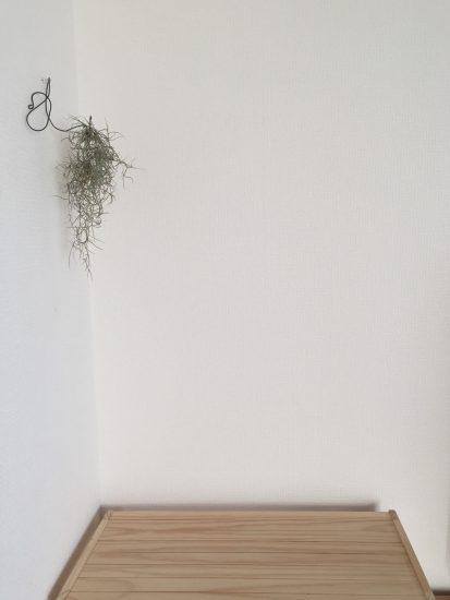 リビング 植物
