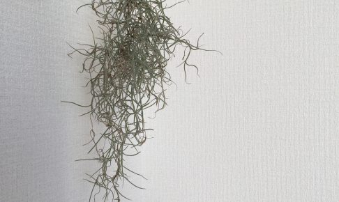 観賞用植物