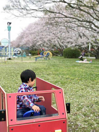 桜 こどもの国 公園