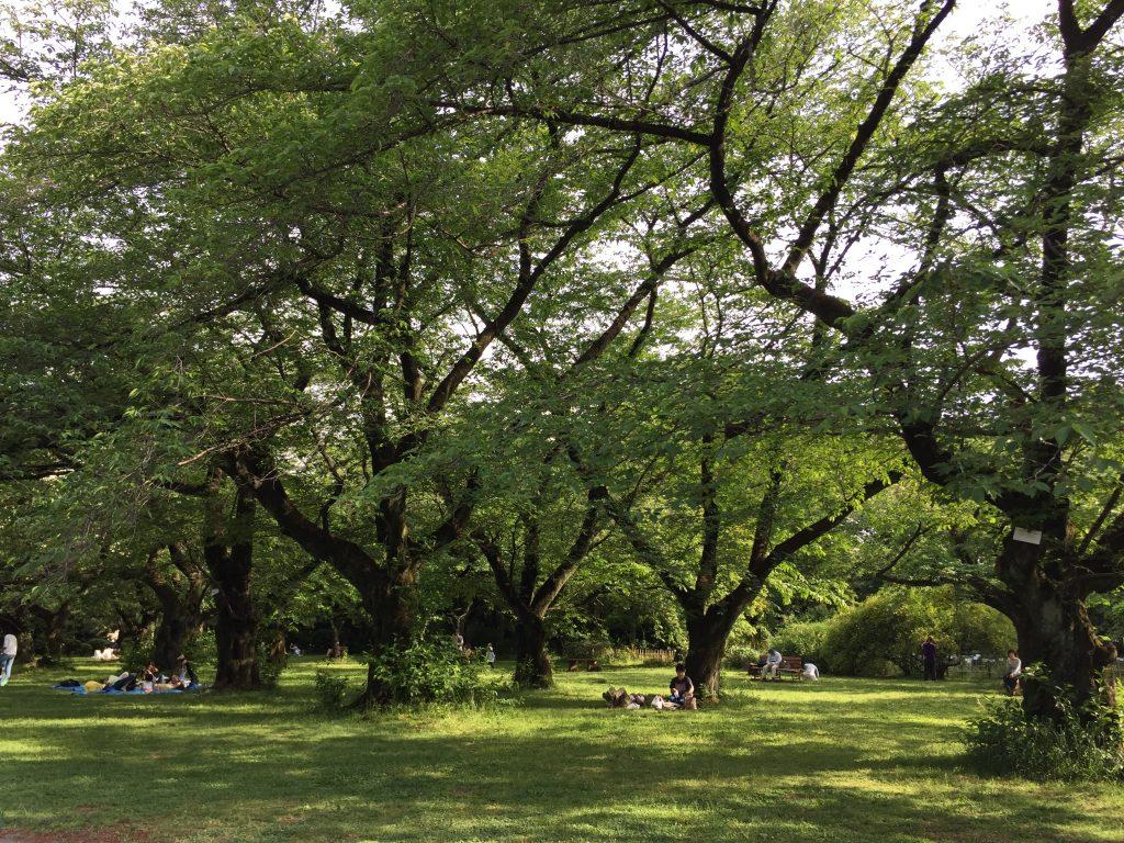 小石川植物園 5月