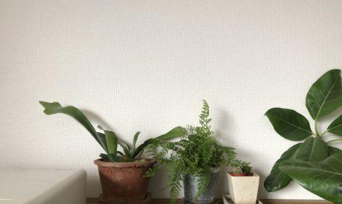 植物 オシャレ