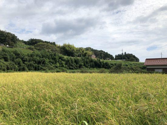 稲刈り 田植え
