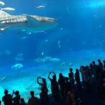 ジンベイザメ 美ら海