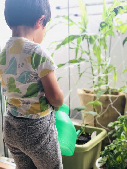 ベランダ 家庭菜園 オシャレ