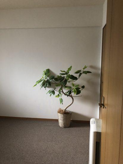 寝室 植物