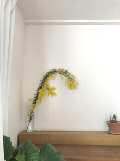 ミモザ 切り花
