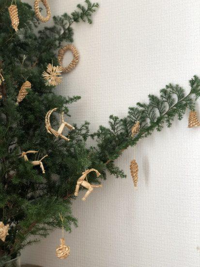 クリスマスツリー 薩摩杉