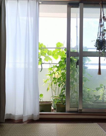 家庭菜園 ベランダ